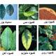 کمبود عناصر غذایی در گیاهان